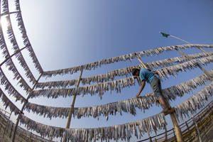 Il Direttore Generale della FAO plaude al trattato che avvicina la fine della pesca illegale