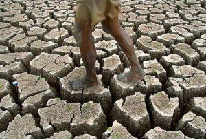 Fao, aumenta la fame del mondo dopo anni di progressi