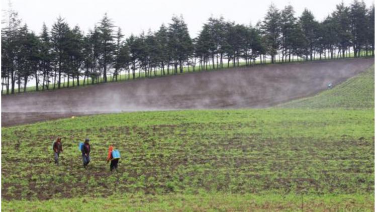 En la Gran Minga Agropecuaria se aspira que 760.000 hectáreas tengan seguro agrícola y ganadero. Foto: Micaela Ayala/Andes