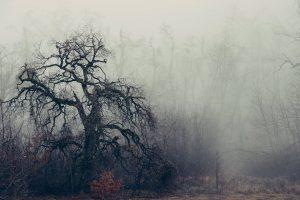 Estamos caminhando para o desaparecimento irreversível das florestas