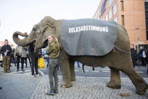 Der Wille des Elefanten – Volksabstimmung