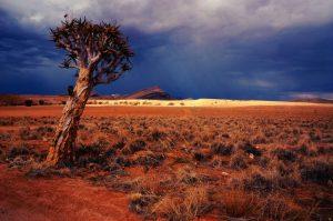 Flucht vor Klimawandel und Land Grabbing als Asyl-Grund