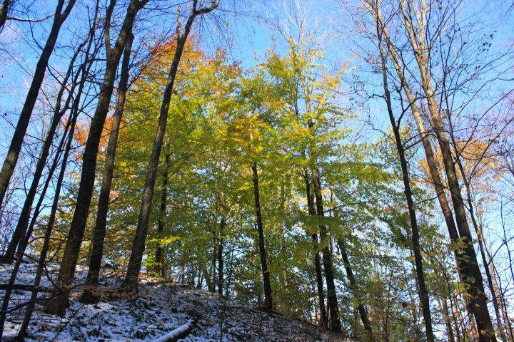 El centro de Lenape: un mensaje de año nuevo por la paz