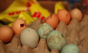 il CETA ci prepara le uova di Pasqua: marce!