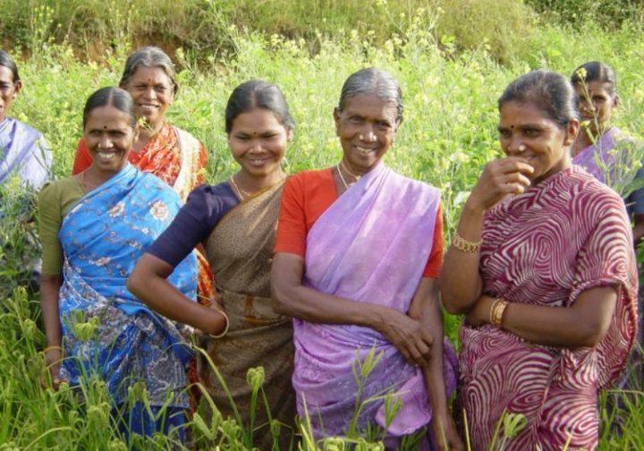 [Les laissés-pour-compte du miracle indien]  Ces femmes qui reprennent en main l'agriculture