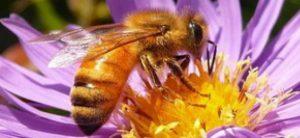 Raffaele Cirone: Las abejas y el clima y cómo afectan nuestras vidas