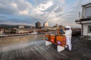 Le api devono essere protette per il futuro della nostra alimentazione