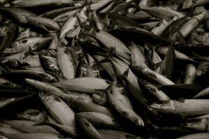 Sahara occidentale, fa discutere la nuova intesa sulla pesca UE-Marocco