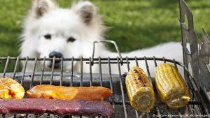 Ein wahrer Tierfreund isst keine Tiere