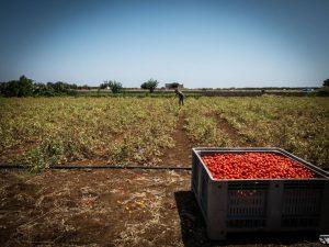 Llamado: el trabajo agrícola mata, la indiferencia también