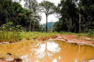 Código Florestal pode tirar proteção de 15 milhões de hectares da Floresta Amazônica