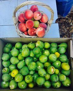El desarrollo de las plantas y la maduración de la fruta
