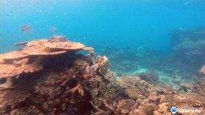 Investigación sobre el clima revela que las temperaturas oceánicas alcanzaron un récord en 2018