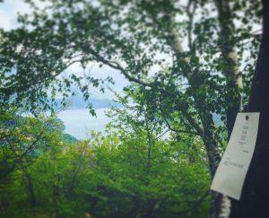 DisseminAzioni: poesie sugli alberi per sopravvivere attraverso la memoria
