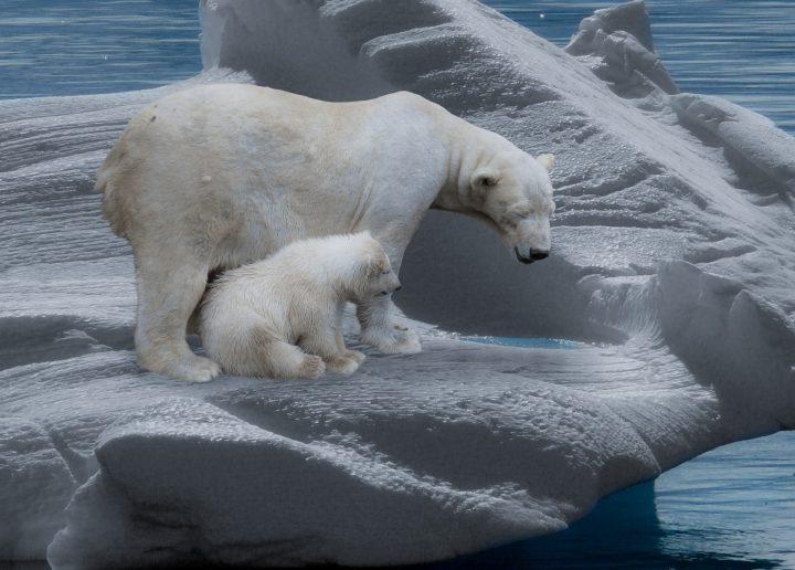 Revolució mental per fer front a l'emergència climàtica