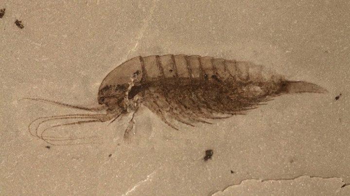 Un verdadero 'tesoro': Encuentran en China fósiles de 101 especies, la mitad de ellas desconocidas