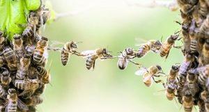 Landesregierung Bayern übernimmt das Volksbegehren Artenvielfalt