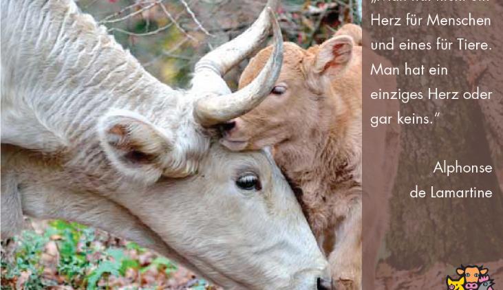 Daniela Böhm: die Kirche hat die Tiere vergessen