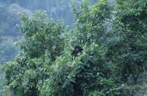 Anch'io ho fotografato i gorilla. Ma senza selfie