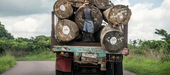 "Investigación: la madera africana ilegal se vende en Europa como ""sostenible"""