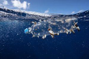 Greenpeace: un piano per la tutela degli oceani