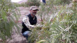 Investigador cubano busca reforestar el desierto chileno para contrarrestar el calentamiento global