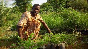 Ambiente e agroforestazione