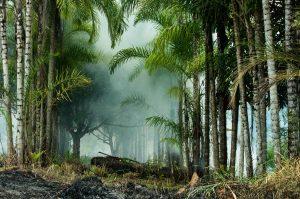 Offener Brief an die EU: stoppt Mercosur, solange Brasilien Menschenrechte verletzt, den Klimawandel leugnet und die Umwelt zerstört