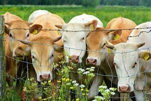 Studie belegt: Die Mehrheit der Deutschen will die Agrarwende