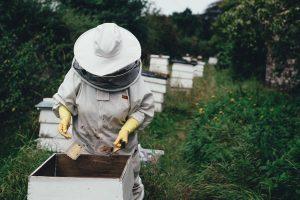 Apicultores brasileños registran 500 millones de abejas muertas en tres meses y apuntan al uso indiscriminado de pesticidas