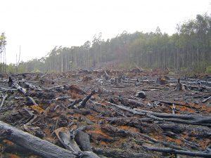 Governo Bolsonaro ameaça reeditar MP que beneficia ruralistas desmatadores