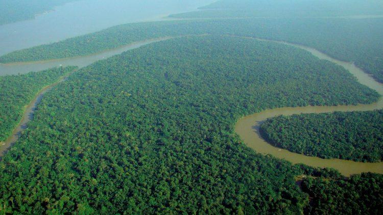 Il sinodo sull'Amazzonia