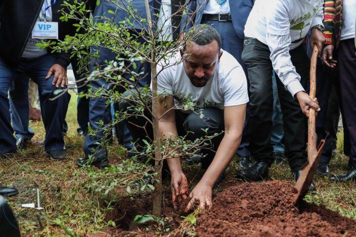 Η Αιθιοπία φυτεύει 350 εκατομμύρια δέντρα μέσα σε δώδεκα ώρες