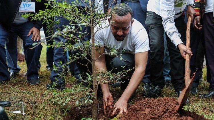 L'Ethiopie plante 350 millions d'arbres en douze heures