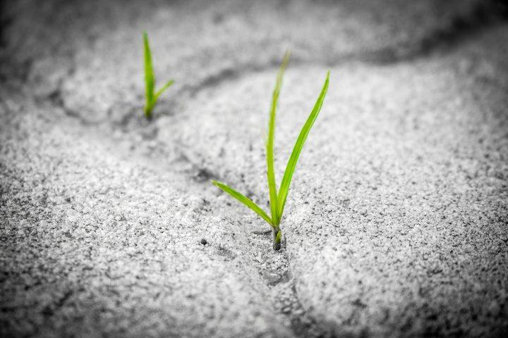 Gute Nachrichten Teil 4 – Der Hoffnungsquickie