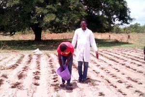 Σενεγάλη: Η βιολογική γεωργία στην υπηρεσία της κοινωνίας