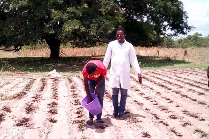 Senegal: La agricultura orgánica al servicio de la sociedad
