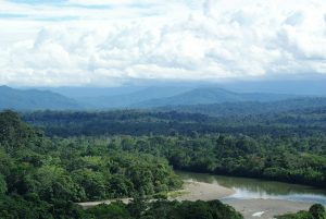 Our Vanishing World: Rainforests
