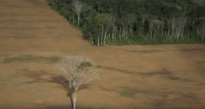Greenpeace sieht Sonderbericht des Weltklimarats als dringenden Aufruf zur Agrarwende