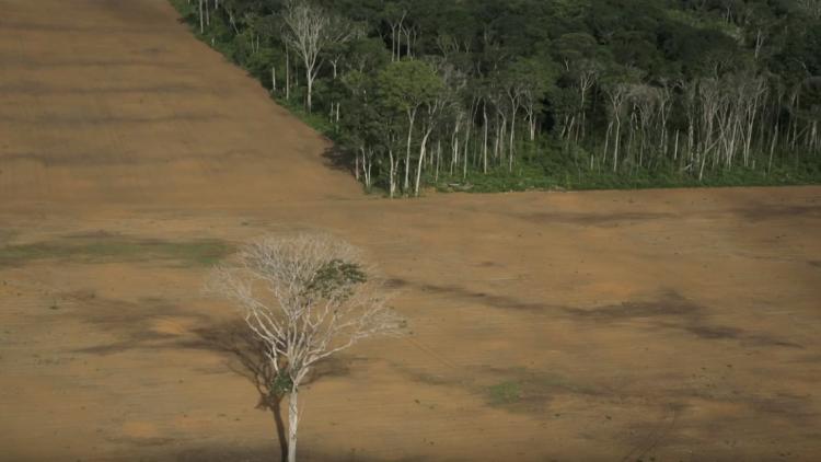 Anlässlich des Sonderberichts des IPCC Weltklimarats fordert Greenpeace politische Verantwortung, speziell bei der weltweiten Waldvernichtung und Abholzung für den Anbau von Tierfutter für die Massentierhaltung. Die Bundesregierung muss mit dem Lieferkettengesetzt auch die deutsche Agrarindustrie in Verantwortung nehmen, Sorge für Klima- und Umweltschutz zu tragen.