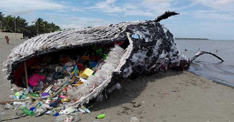 Can Recycling Really Solve The Plastic Problem?
