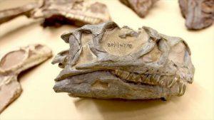 Les archéologues découvrent de nouvelles espèces de dinosaures par hasard