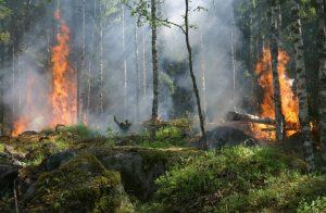 Incendi: non solo Amazzonia, a rischio in Africa la seconda foresta pluviale del pianeta