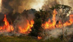 ¡Salvemos la Amazonía! ¡Salvemos el planeta!