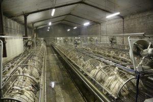 """Un milione e mezzo di """"sì"""" per vietare le gabbie negli allevamenti"""