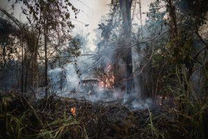Der Amazonas – so brennt er