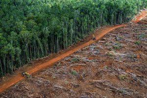 L'Amazzonia brucia, e noi la stiamo mangiando boccone per boccone