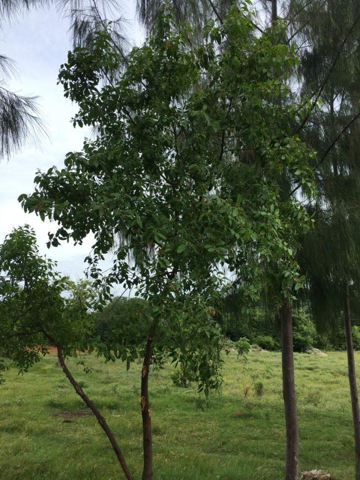 alberi08