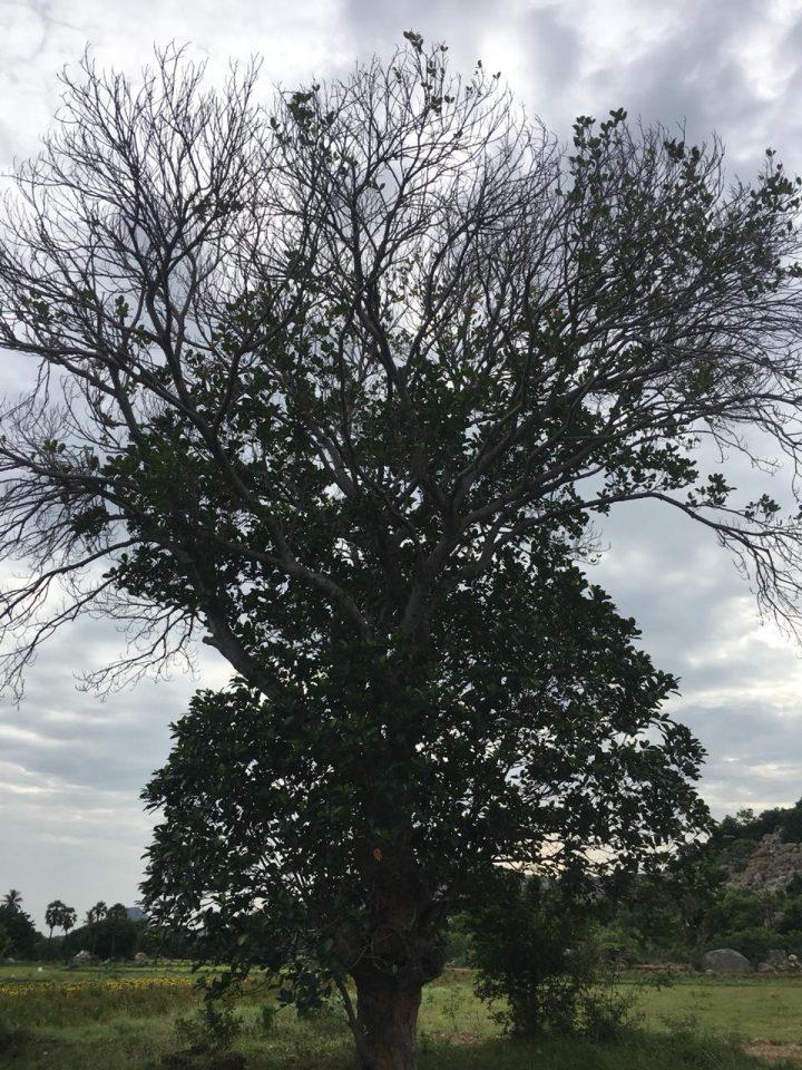 alberi09