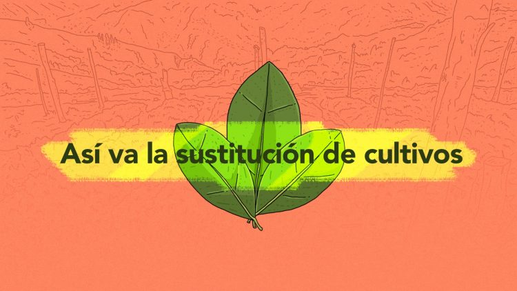 Colombie. Accords de paix de La Havane, point 4 : Comment se passe la substitution des cultures illicites ?